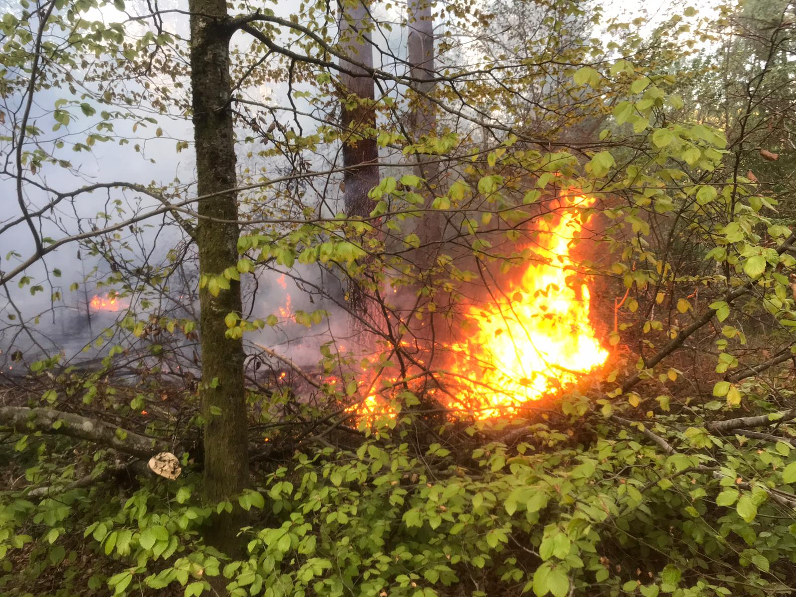 Waldbrand in Lörrach-Hauingen